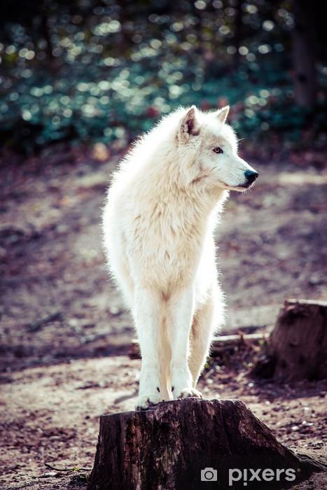 Papier peint vinyle Loup blanc de l'Arctique - Thèmes