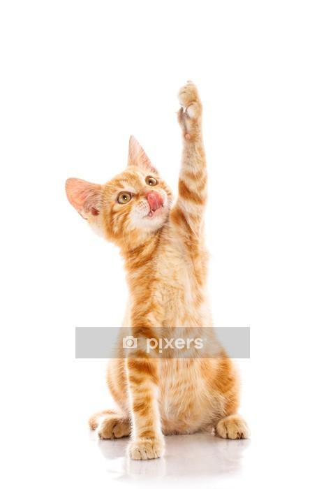 Muursticker Rode kleine kat - Zoogdieren