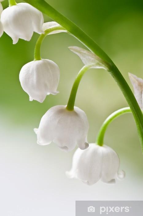Vinyl Fotobehang Lily of the valley - Bloemen