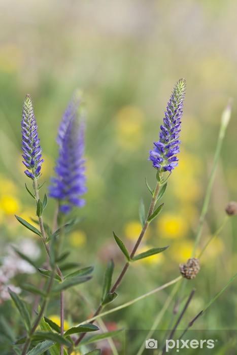 Adesivo Pixerstick Speedwell Spiked, Veronica spicata, Scrophulariaceae - Fiori