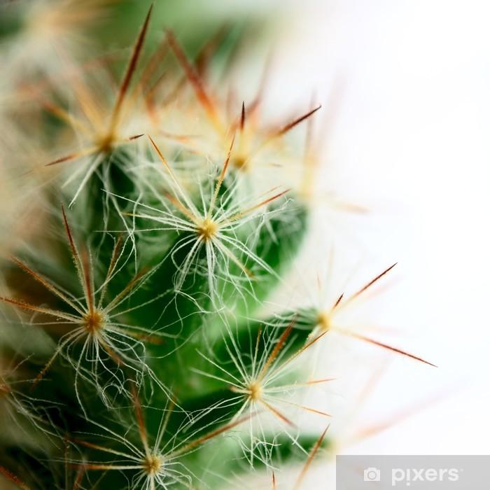 Papier peint vinyle Petit cactus de Mamillaria avec de grandes épines macro tournage - Plantes
