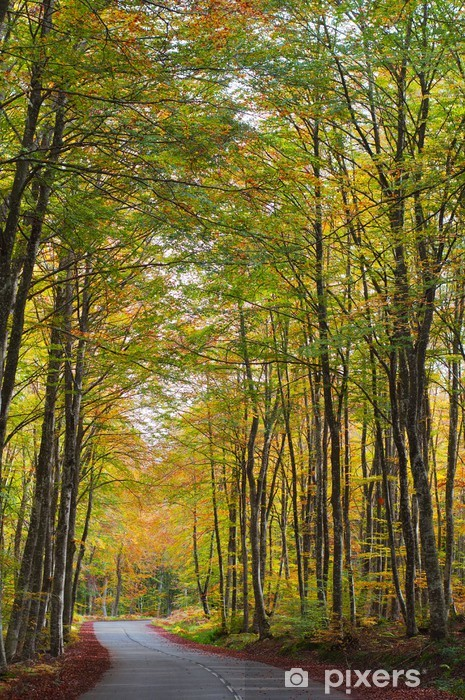 Fototapeta winylowa Droga w lesie jesienią, kolory jesieni - Drzewa