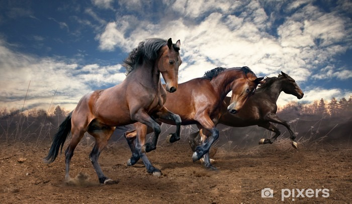 Fototapeta winylowa Dzikie konie laurowe skok - Tematy