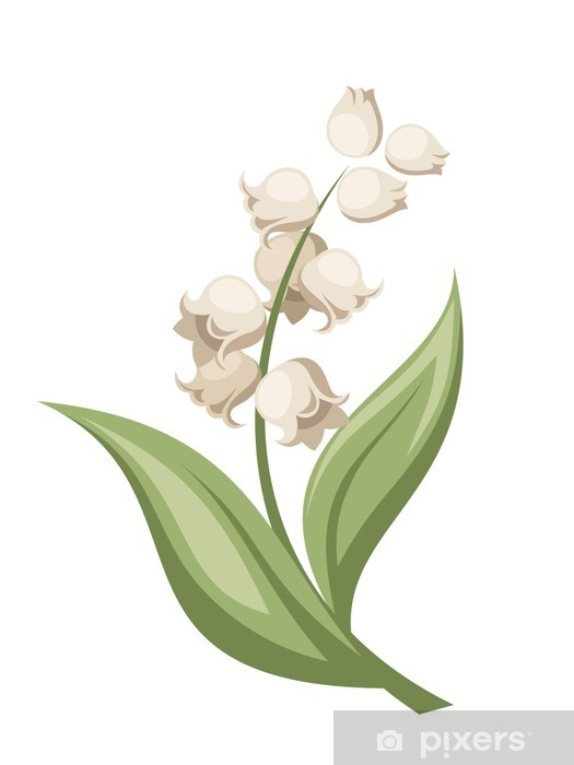 Lily Of The Valley Flower Vector Illustration Wall Mural