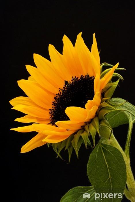 Sunflower Pixerstick Sticker - Themes