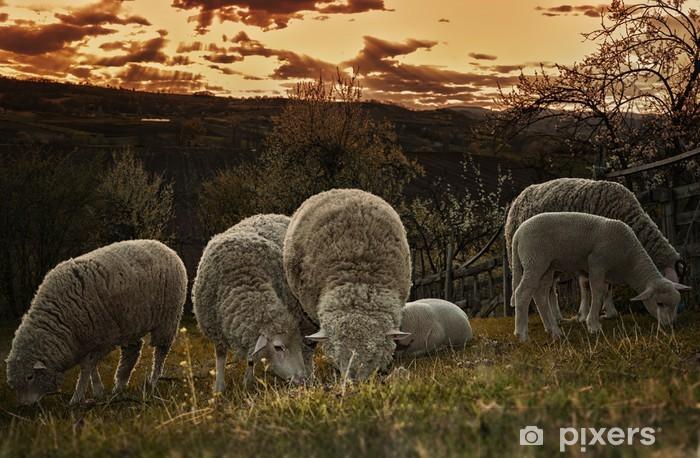 Papier peint vinyle Groupes de pâturage des moutons dans un pâturage - Mammifères