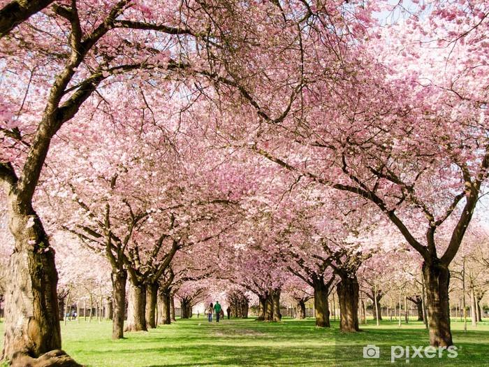 Vinylová fototapeta Romantické Blütentraum japonské třešňové květy :) - Vinylová fototapeta
