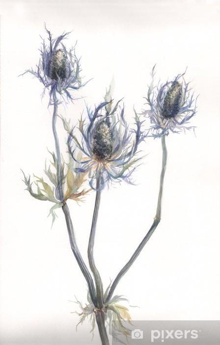 papier peint l 39 aquarelle dessin e la main du chardon des champs echinops plante pixers. Black Bedroom Furniture Sets. Home Design Ideas