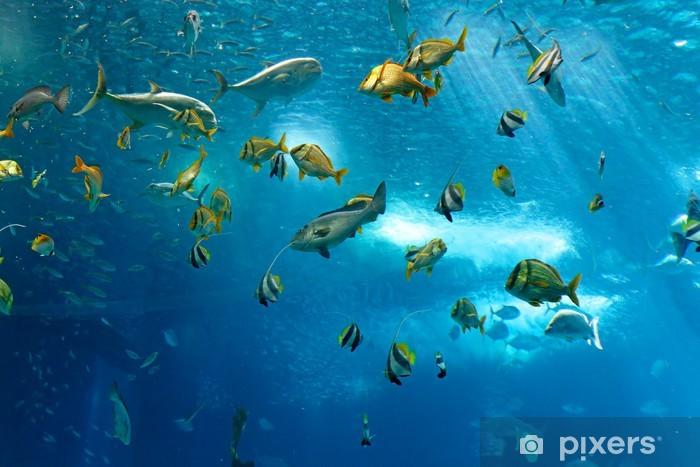 Naklejka Pixerstick Kolorowe ryby - Ryby