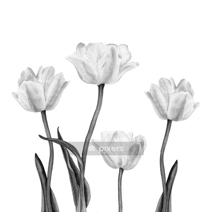 Muursticker Aquarel illustratie van een mooie witte tulp bloemen - Stijlen