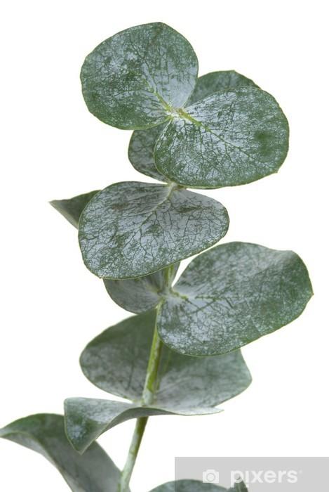 Vinylová fototapeta Eucalyptus Leaf - Vinylová fototapeta