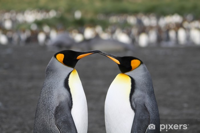 Fototapeta winylowa Penguins - Szczęście