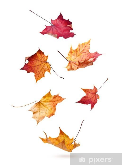 Adesivo Pixerstick Foglie di acero di foglie che cadono giù isolato su sfondo bianco - Pace