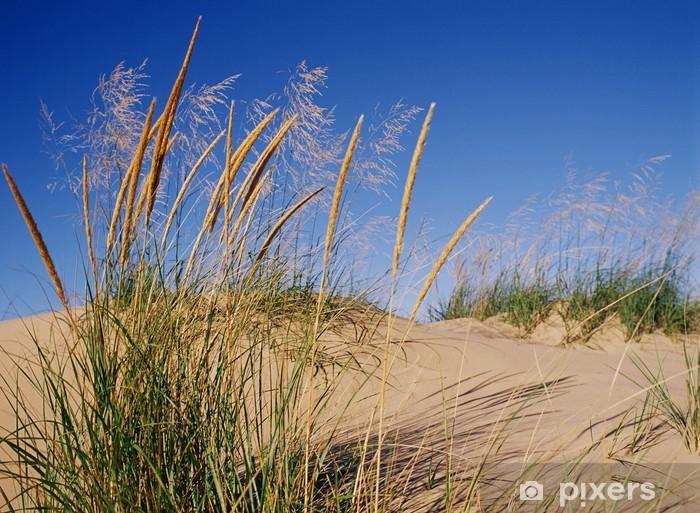 Fototapeta winylowa Blows Trawa Dune w wiatru na jezioro Michigan - Ameryka
