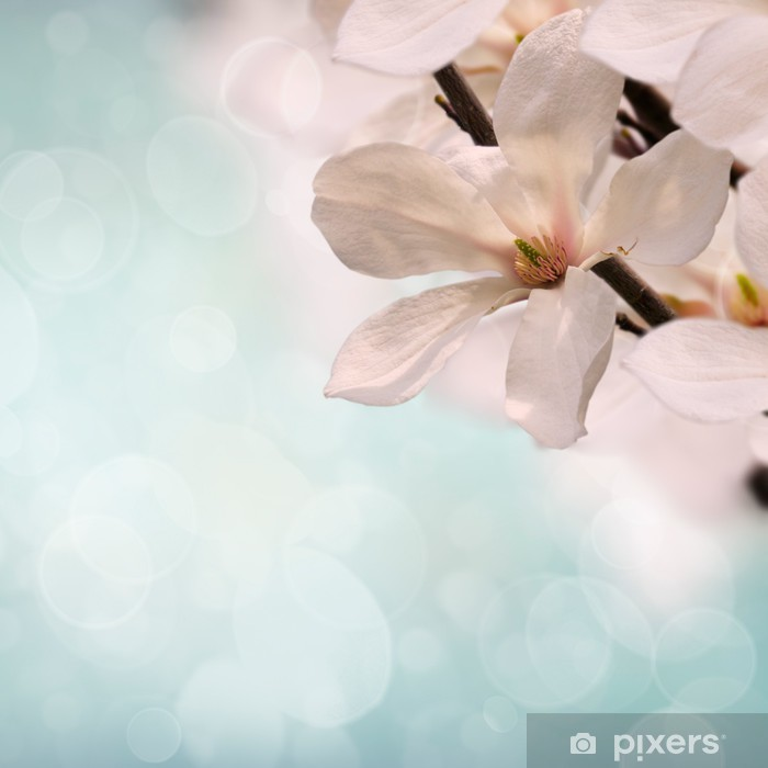Pink Magnolia Flowers Wall Mural Pixers We Live To Change
