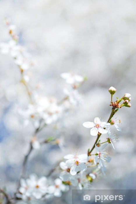 Papier peint vinyle Spring tree - Arbres