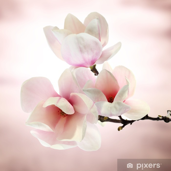Papier peint vinyle Magnolia - Thèmes