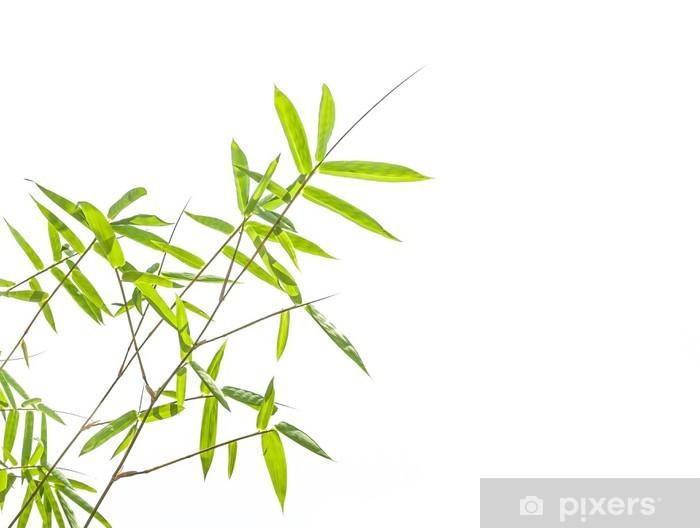 Pixerstick Aufkleber Bambus-Blätter auf weißem Hintergrund - Bäume
