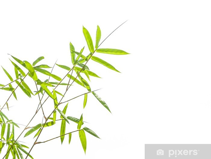 Vinyl-Fototapete Bambus-Blätter auf weißem Hintergrund - Bäume