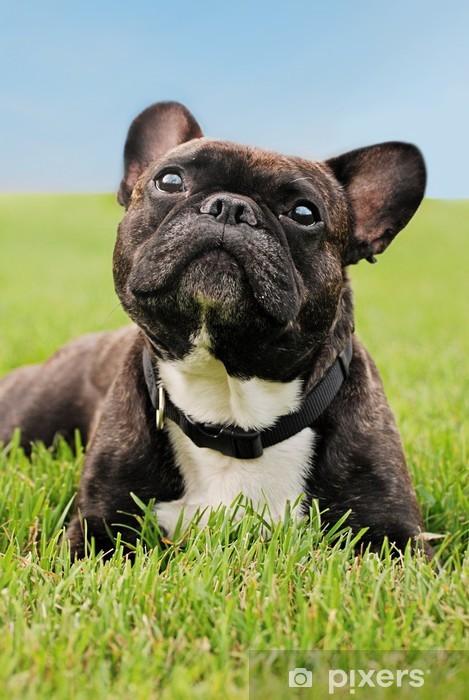 Pixerstick Sticker Franse Bulldog tot in het gras - Mopshonden