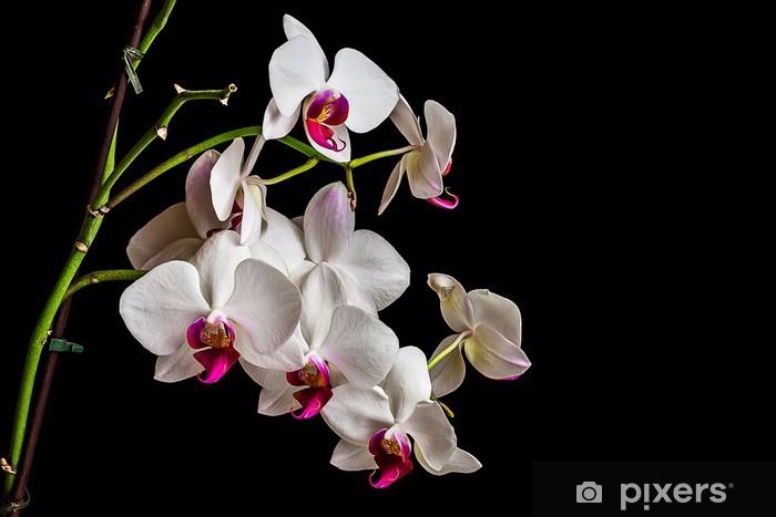Vinylová fototapeta Krásné orchideje na tmavém pozadí - Vinylová fototapeta