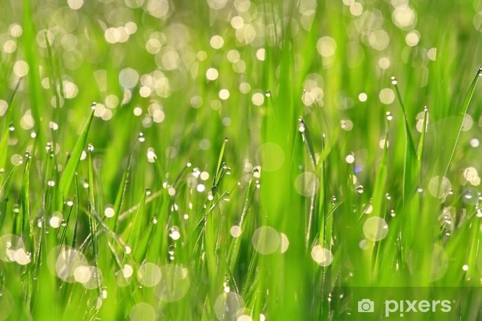 Naklejka Pixerstick Rosa na zielonej trawie - Tła