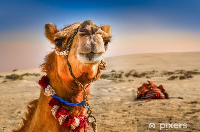 Papier peint vinyle Détail de la tête de chameau avec expresion drôle - Désert