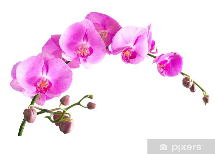 Sticker Pixerstick Images Orchid falenopsis.Seriya. - Sticker mural