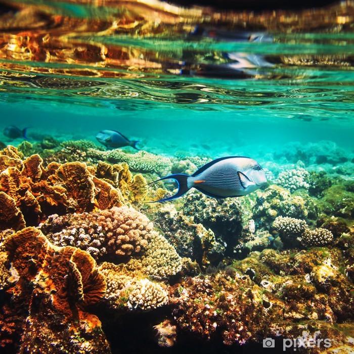 Fotomural Estándar Peces corales - Arrecife de coral