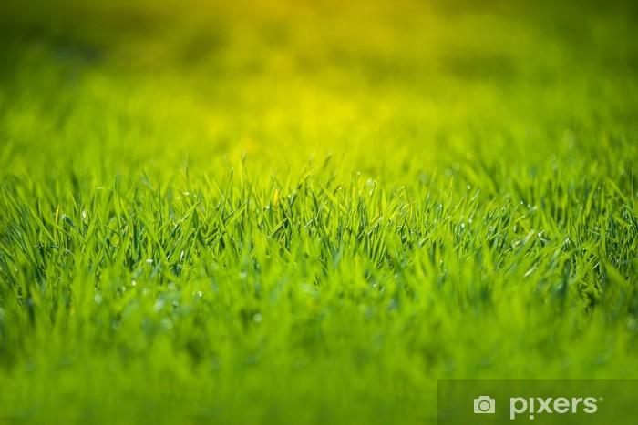 Vinyl-Fototapete Frisches grünes Gras - Jahreszeiten