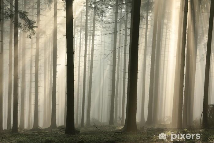 Pixerstick Sticker Zonnestralen passeren bomen in een naaldbos - Thema's