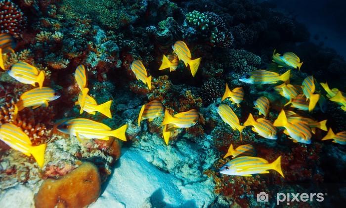 Naklejka Pixerstick Marine life background - Zwierzęta żyjące pod wodą