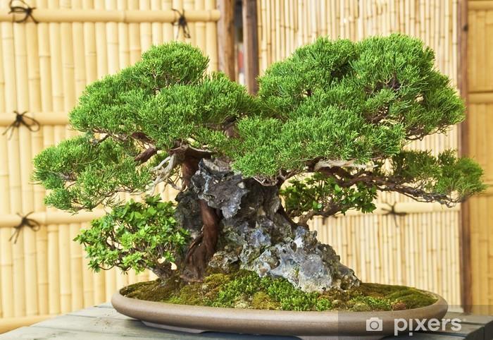 Bonsai Pixerstick Sticker - Home and Garden