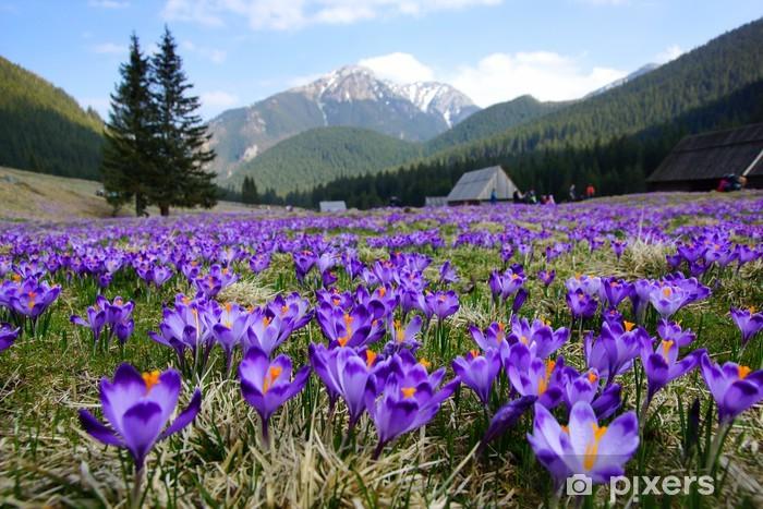Crocuses in Chocholowska valley, Tatra Mountains, Poland Pixerstick Sticker - Meadows, fields and grasses