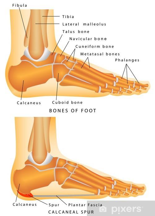 ben i foten