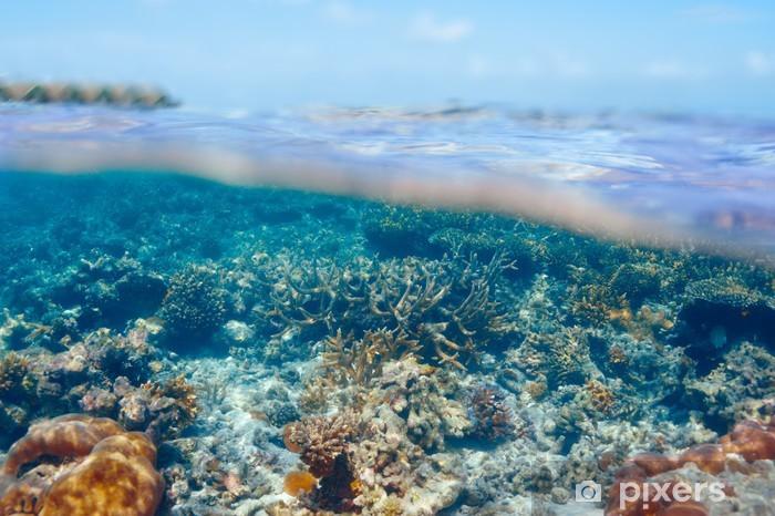Sticker Pixerstick Récif de corail à Maldives - Récif de corail