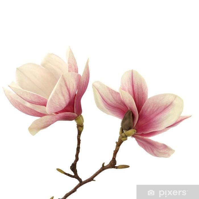 Nálepka Pixerstick Magnolie - Květiny