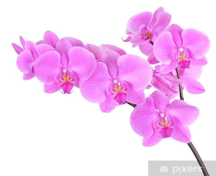 Phalaenopsis orchid Pixerstick Sticker - Wall decals