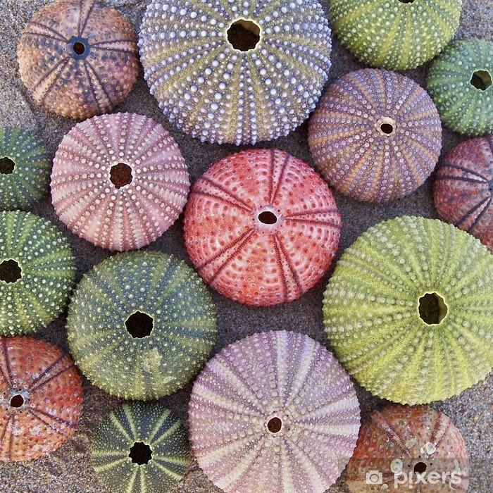 Afwasbaar Fotobehang Verscheidenheid van kleurrijke zee-egels op nat zand strand - Achtergrond