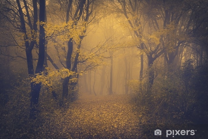 Mysterious foggy forest with a fairytale look Self-Adhesive Wall Mural - Landscapes