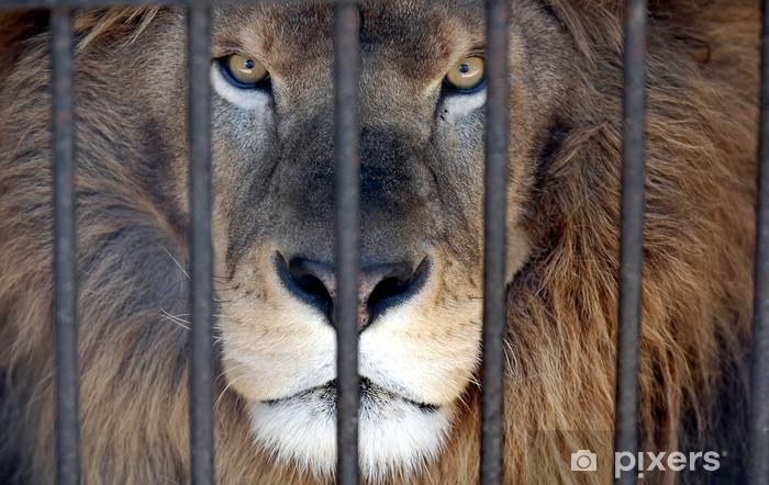 Nálepka Pixerstick Král za mřížemi - Život