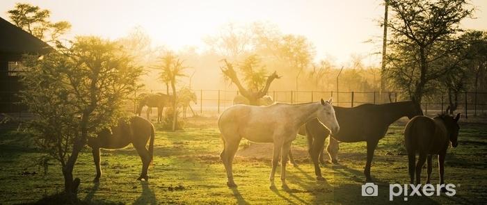 Afwasbaar Fotobehang Vroege ochtendboerderij - Reizen