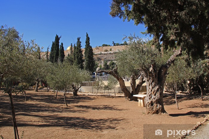 Fototapeta winylowa Ogrójcu w Izraelu - Bliski Wschód