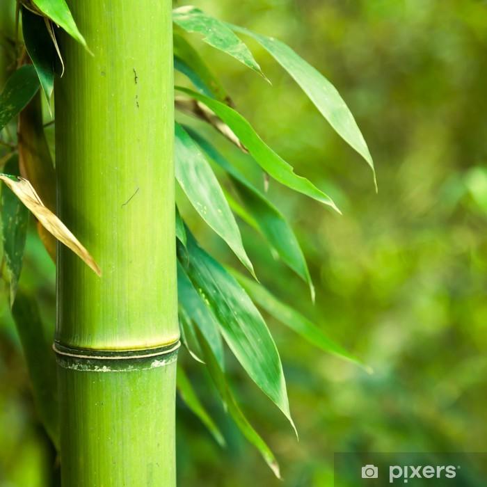 Naklejka Pixerstick Bambus lesie tła - Rolnictwo