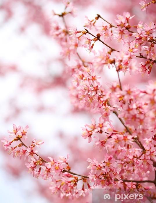 Sticker Pixerstick Cherry Blossom. Sakura dans le printemps. Belles fleurs rose - Thèmes