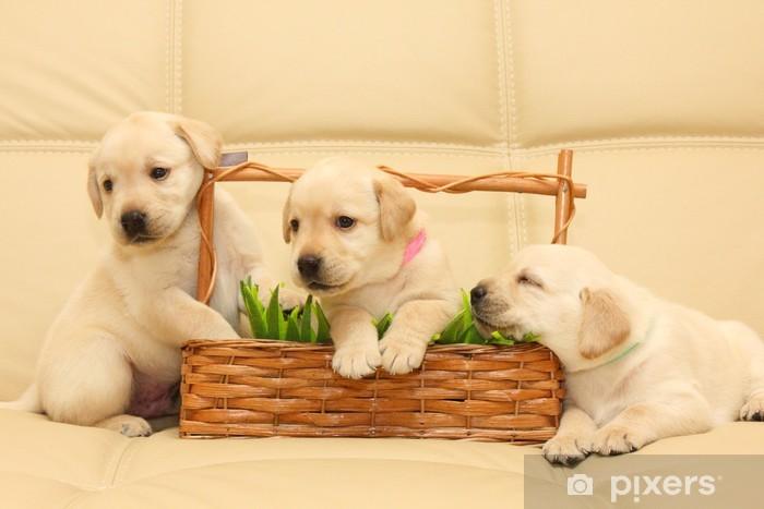 Sticker Pixerstick Chiots Labrador. - Mammifères