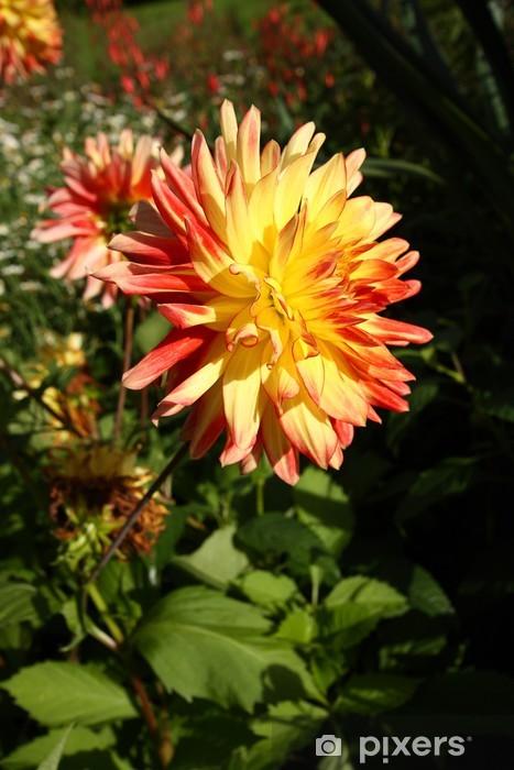 Nálepka Pixerstick Barevné červené a žluté dahlia květina - Roční období