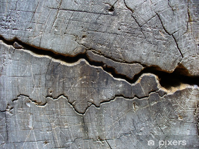 Fotomural Estándar Anillos tocón de árbol - Árboles