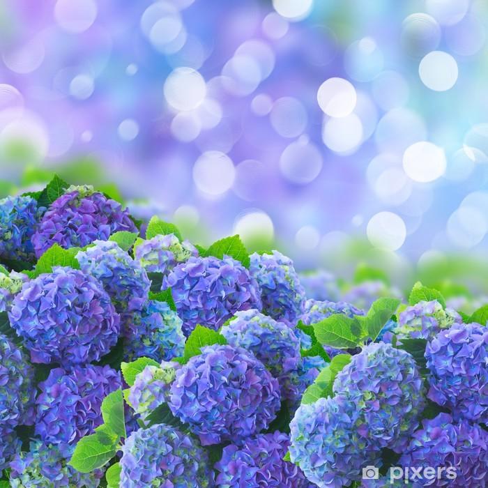 Fototapeta winylowa Niebieski Hortensia kwiaty. - Kwiaty