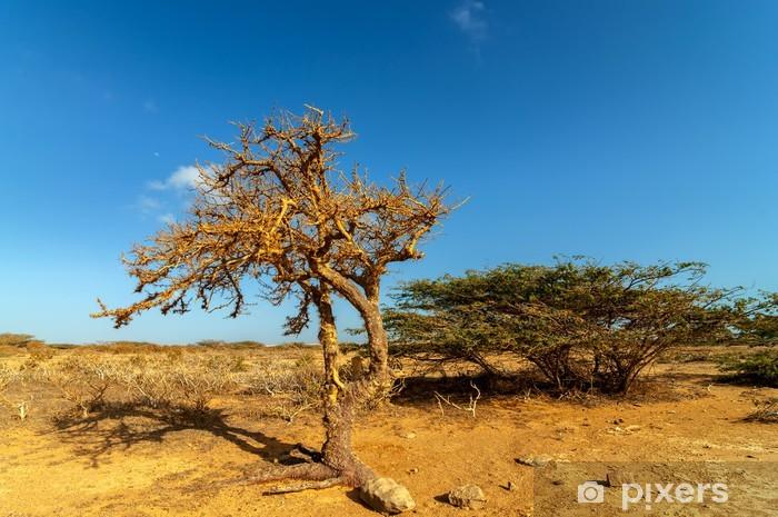 Vinyl-Fototapete Dry Verdrehter Baum in einer Wüste - Amerika